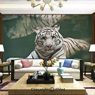 Mural Wall Art Photo Decor Wall Mural for Living Room or Bedroom,Bengal Symbol Swimming White Beast with Black Sprites Large Cat Animals Having Fun,Home Decor - 66x96 inches