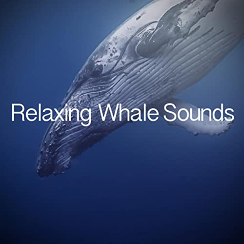 Whale Samples 2 by Sounds of Ice on Amazon Music - Amazon com