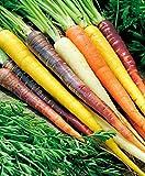 800 + ARCO IRIS Zanahorias naturales 5 Colores semillas orgánicas no GMO Gourmet Garden