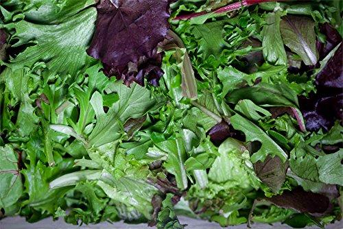 Laitue - Mélange - Heirloom - Bio - 100 graines