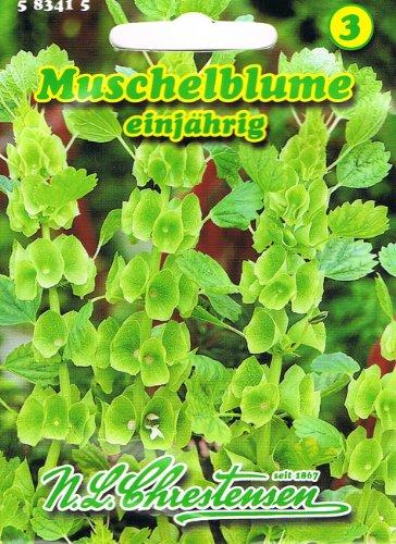 Muschelblume Molucella leavis