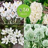 50x Blumenzwiebeln Mix'White Collection' | 50er Set | Eranthis + Crocus + Hyacinthus + Allium Zwiebeln | Weiße Blüte |...