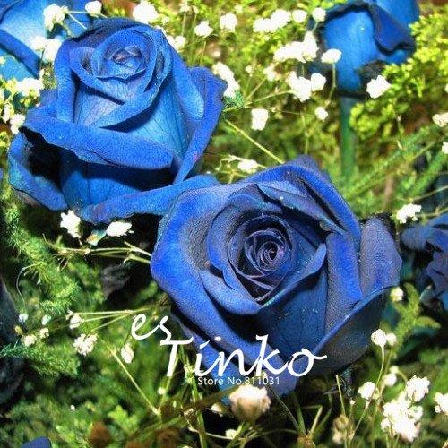 Variétés Couleurs Rose Graines Rare plusieurs fleurs en pot Graines Rose Garden Patio Balcon Bonsai usine de bricolage 100pcs 20