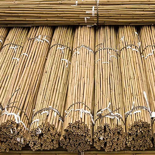 FlickBuyz 2ft 3ft 4ft 5ft Garden Bamboo Canes/Poles/Stakes/Trellis Strong Quality Plant Support Green Canes (10, 5ft - 150cm)