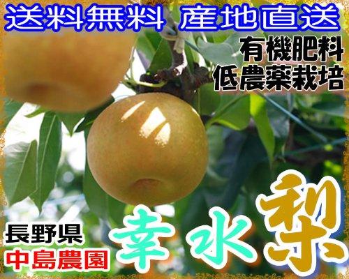 【訳あり】減農薬 長野産 幸水梨 12~15玉 約4.5kg入 産地直送