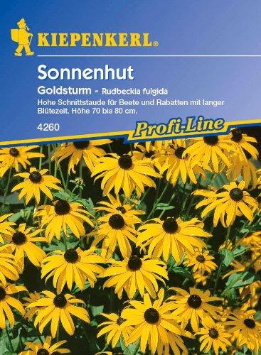 Sonnenhut, 'Goldsturm'