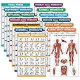 """14 Pack - Exercise Poster Set: Dumbbell, Suspension, Kettlebell, Resistance Bands, Stretching, Muscular, Medicine Ball, Battle Rope, Bodyweight, Barbell, Yoga, Exercise Ball (LAMINATED, 18"""" x 27"""")"""