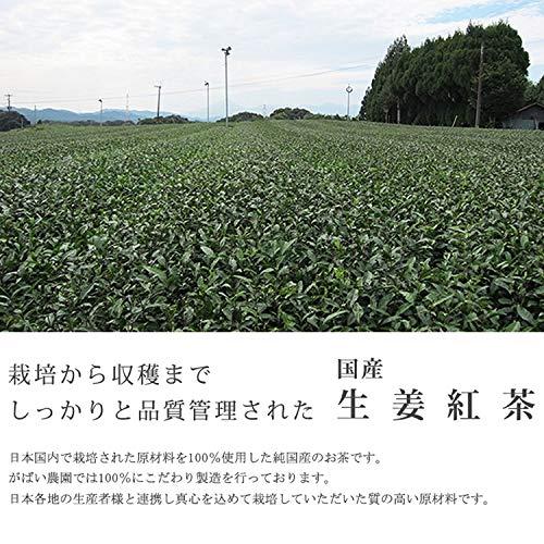 がばい農園『国産生姜紅茶』