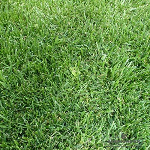 Grassamen Rasensamen Super-Strap-Rasen robust (3 kg)