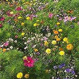 BERINGMEIERS BESTE   HONIG- und AUGENWEIDE   Bienenwiese   Blumenwiese   Blumen Saatgut für ca 50 m²   100 Gramm