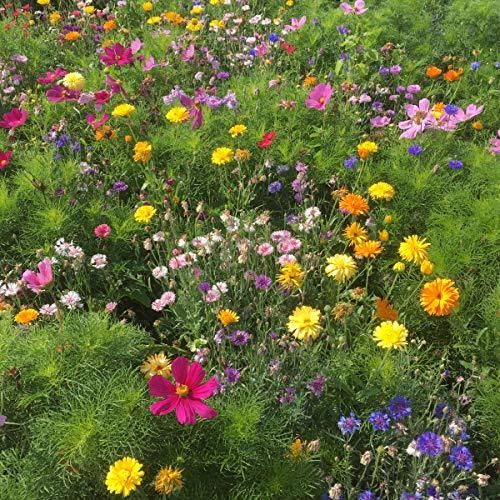 BERINGMEIERS BESTE | HONIG- und AUGENWEIDE | Bienenwiese | Blumenwiese | Blumen Saatgut für ca 50 m² | 100 Gramm