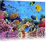 Bunte Fische über Korallenriff Format: 100x70 auf