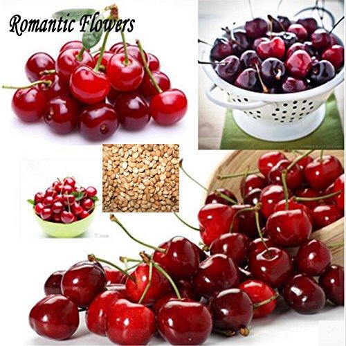 10pcs / Pack New saindoux merise graines, fruits frais arbre Graines Livraison gratuite