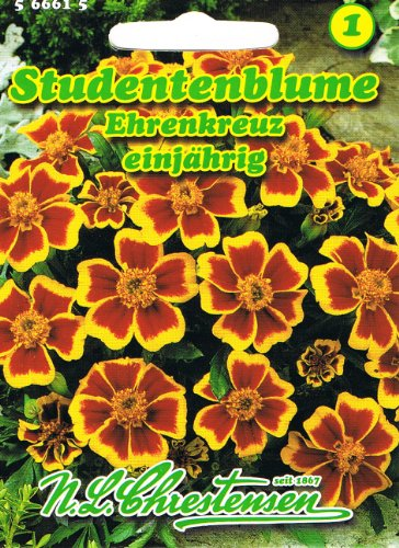 Studentenblume Ehrenkreuz Tagetes patula nana
