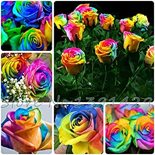 Free shipping 100 Seeds Rare Holland Rainbow Rose Flower Lover Multi-color Plants Home Garden rare rainbow rose flower seeds