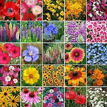 7g+Seeds Wildflower Pacific Northwest Mix Seeds