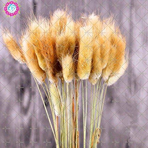 100 Pcs graminée Graines, Graines de fétuque colorés Bonsai Graminées Graines de jardin Plantes 5 pot