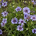 Outsidepride Blue Daisy