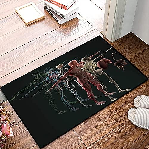 QDYLM Tappetino da Bagno Antiscivolo Microfibra, Anatomia Umana Vista esplosa Organi ossei muscolari Separati decostruiti nervosiTappeto da Bagno Addensato Che assorbe l'acqua per Bagno, 40x60 cm