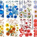 Atoli Real Dried Pressed Flowers Leaves Petals for Crafts, Dried Flowers for Resin Art Floral Decors,Colorful Pressed Flowers Daisies for Candle Jewelry Nail Pendant Crafts Making