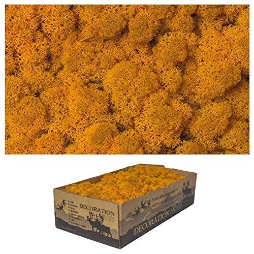 1 caja de musgo real – Musgo decorativo natural para manualidades en diferentes variedades frescas – DIY – musgo islando, musgo de bala, musgo colina Sphagnum (1 x naranja musgo islandés)