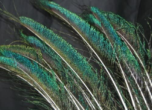 20 Peacock Sword Fern Ranking Max 82% OFF integrated 1st place Feathers 30-35