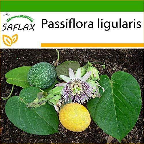 SAFLAX - Süße Granadilla - 20 Samen - Mit keimfreiem Anzuchtsubstrat - Passiflora ligularis