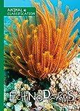 Echinoderms (Animal Classification)