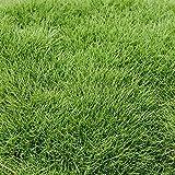 Prato di Zoysia tenuifolia (x 2,5 mq di superficie)