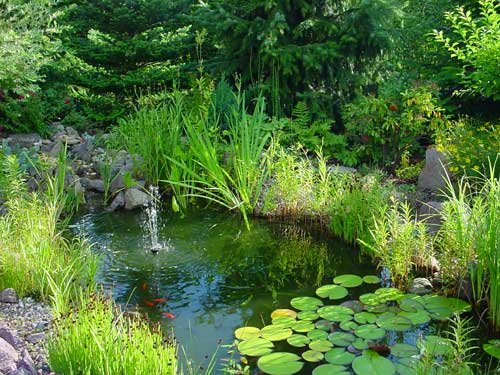 Einsteiger Teichset, ca. 50 Teichpflanzen, 10 Sorten