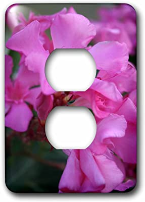 Hawaii Oahu 3dRose LSP/_230735/_6 USA Plumeria Flowers Blooming Plug Outlet Cover