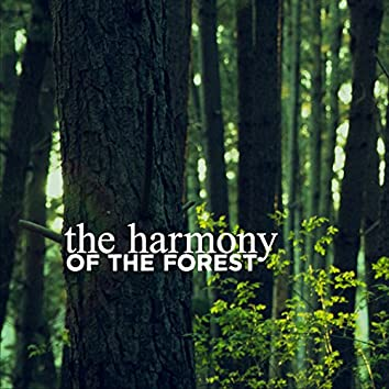 The Harmony of the Forest