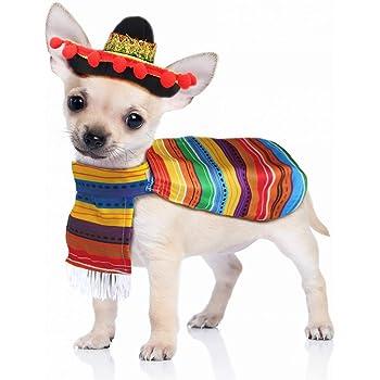 Pet Sombrero Hat with Multicolor Trim