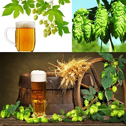 Semillas para jardinería, 120 unidades de semillas de humulus Iupulus plantación de lúpulo para hacer cerveza en casa planta de jardín
