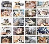 Edition Seidel Set 20 Katzen Postkarten mit lustigen Sprüchen - Karten mit Spruch - verrückte Katzen - Geburtstag - Motivation (20 Karten)