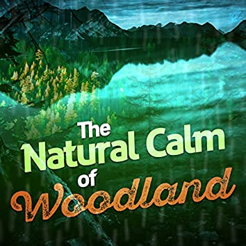 The Natural Calm of Woodland