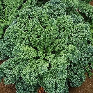 blue scotch kale