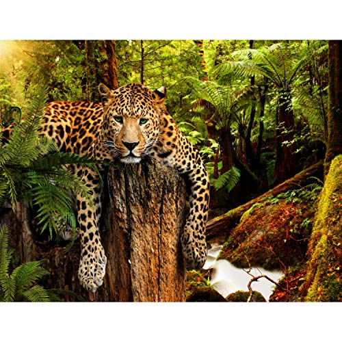 Fototapete Leopard Afrika 396 x 280 cm Vlies Wand Tapete Wohnzimmer Schlafzimmer Büro Flur Dekoration Wandbilder XXL Moderne Wanddeko - 100% MADE IN GERMANY - Runa Tapeten 9201012a