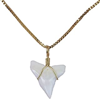 GemShark Real Sharks Tooth Necklace 14 K Gold Plating Box Collarbone O Chain Charm for Girl …