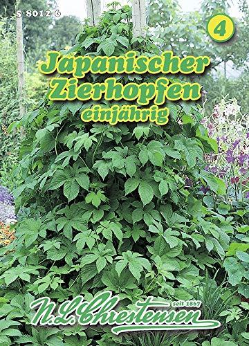N.L. Chrestensen 580126 Japanischer Zierhopfen (Zierhopfensamen)