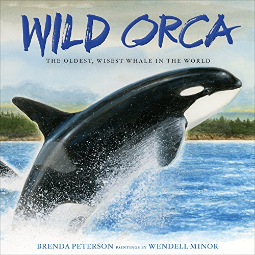 Wild Orca: The Oldest, Wisest Whale in the World