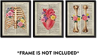 SUMGAR Vintage Wall Art Anatomy Posters 8x10 Dictionary Unframed Prints Flower Artwork Set of 3