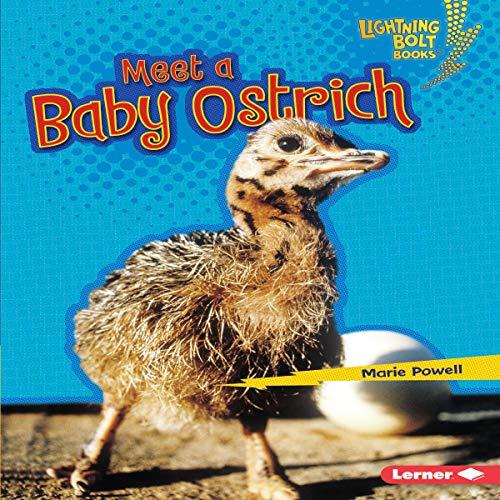 『Meet a Baby Ostrich』のカバーアート