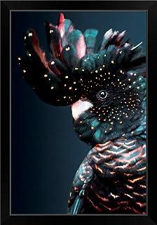 "CANVAS ON DEMAND Cockatoo Black Framed Art Print, 23""x33""x1"""
