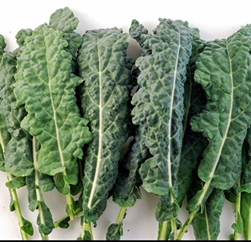 Kale Futter premier 500 Samen Non GMO ez wachsen