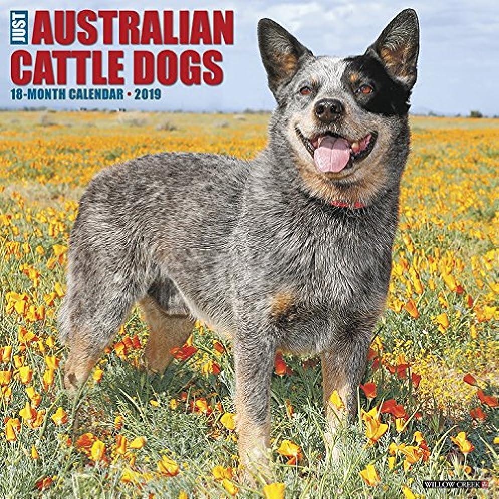苦痛信じるストリップJust Australian Cattle Dogs 2019 Calendar