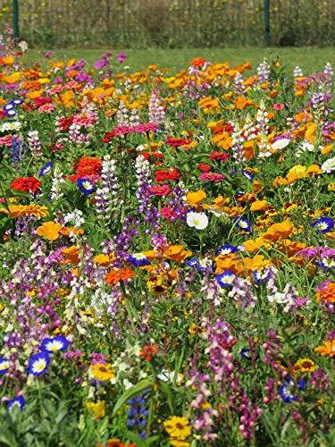 Blumenwiese Vielfarbiger Mini-Teppich Z901 (25 g)