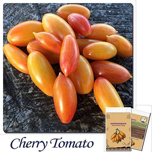 blush tomato seeds - 3