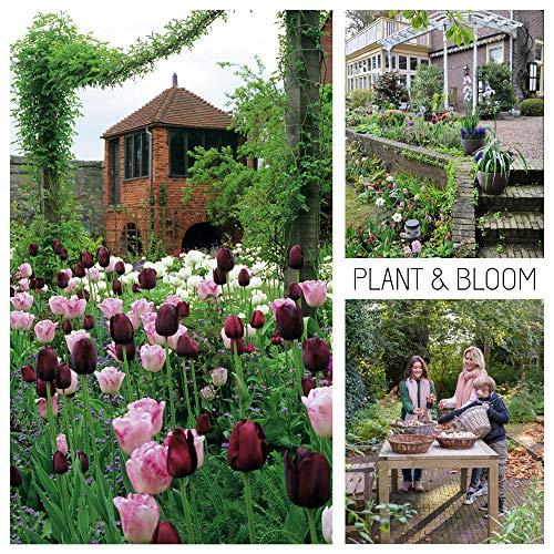 Plant & Bloom Tulpenzwiebeln aus Holland, 30 Zwiebeln - Gartenhaus Tulpen-Taschen - Einfach zu züchten - Für den Herbst - Blüten in Rot, Rosa & Weiß - Top niederländische Qualität