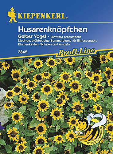 Kiepenkerl Husarenknöpfchen Gelber Vogel Sanvitalia procumbens